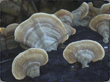 독버섯7.png